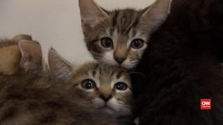 VIDEO: Studi Buktikan Kucing Bisa Tertular Virus Corona