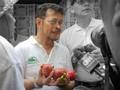 Ekspor Manggis ke China Naik 2 Kali Lipat di Tengah Pandemi