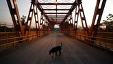 A dog walks on the San Ignacio de Loyola International Bridge that crosses the Pilcomayo River, the natural border between Paraguay's Puerto Falcon and Argentina's Clorinda, Monday, April 27, 2020. The nations closed their borders amid the spread of the new coronavirus. (AP Photo/Jorge Saenz)