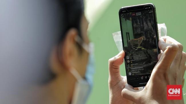 Petugas merekam video polah harimau sumatera untuk disiarkan secara langsung melalui media sosial di Taman Margasatwa Ragunan, Jakarta, Minggu (17/5/2020). Siaran langsung polah dua harimau bernama Hana dan Tino itu bertujuan untuk memberikan wawasan tentang satwa dan hiburan kepada masyarakat selama masa pandemi COVID-19. CNN Indonesia/Adhi Wicaksono