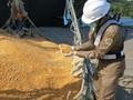 Sumbawa Lepas Ekspor 6,6 Ribu Ton Jagung ke Filipina