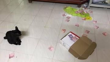Gara-gara Kucing, Istri Temukan Tabungan Rahasia Suami yang Ngaku Bokek