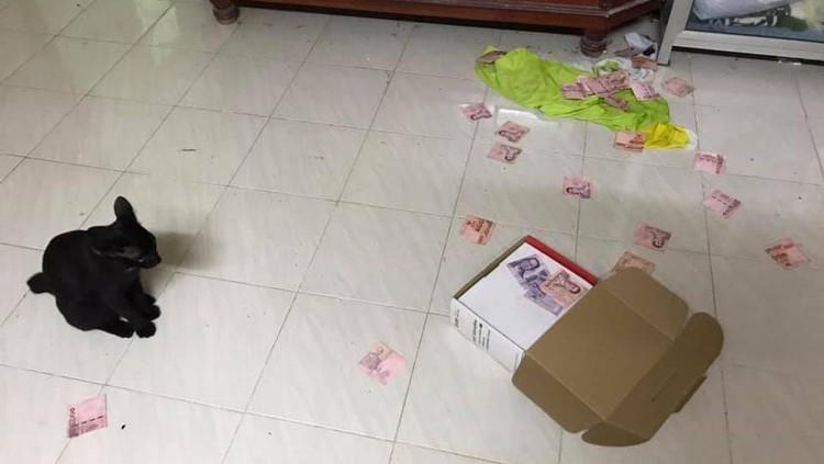 Kucing temukan uang