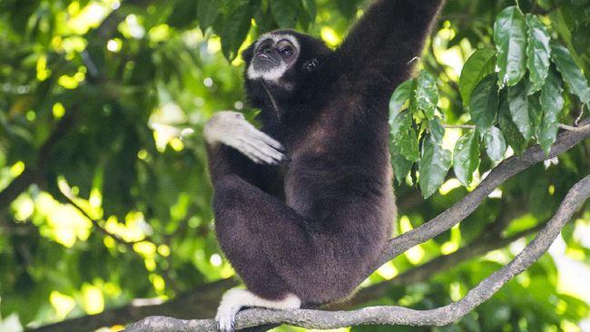 Virtual Tour Kebun Binatang