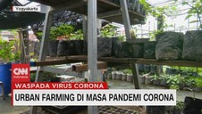 VIDEO: Urban Farming di Masa Pandemi Corona