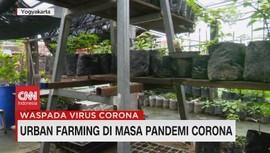 VIDEO: Urban Farming di Masa Pandemi Corona