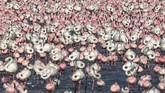 Flocks of flamingos stand in a pond in Navi Mumbai on May 14, 2020. (Photo by Punit PARANJPE / AFP)