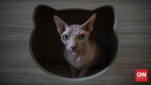 FOTO: Kafe Kucing Bersolek Menyambut New Normal
