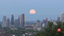 VIDEO: Melihat Keindahan Bulan Stroberi