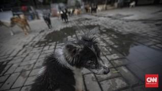 FOTO: Rumah Anjing Terlantar Terdampak Pandemi