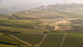 Istria Kelebihan Stok Wine Akibat Pandemi Virus Corona
