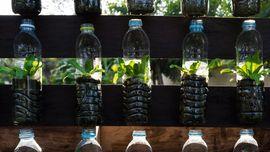 Cara Mudah Menanam Hidroponik dengan Botol Bekas