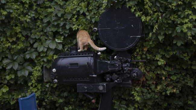 In this Monday May 25, 2020 photo a cat stands on an old projector on display at the Zephyros open-air cinema that specializes in films from past decades in the Petralona district in central Athens. Like so much else, Greece's open-air cinemas, where patrons can enjoy a movie in the flower-scented moonlight with a drink, a snack and even a smoke, have been hard-hit by lockdown measures. (AP Photo/Petros Giannakouris)