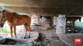 Chelsea Islan dan Sherina Gabung Kampanye Peduli Kuda Delman