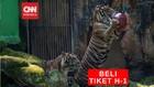 VIDEO: Masuk Ragunan Wajib Beli Tiket H-1 Sebelum Berkunjung