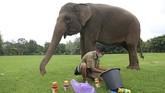 Pawang gajah Andi Kurniawan, (29) mempersiapkan peralatan lukis untuk gajah peliharaan Taman Wisata Candi (TWC) Borobudur Zella.