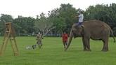 Gajah peliharaan Taman Wisata Candi (TWC) Borobudur Zella bersiap belajar melukis di taman Lumbini, Borobudur, Magelang,  Jawa Tengah.