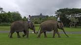 Gajah peliharaan Taman Wisata Candi (TWC) Borobudur Zella dan Echa berjalan beriringan menuju taman Lumbini, Borobudur, Magelang,  Jawa Tengah.