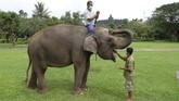 Pawang gajah Maidi, 47 (kiri) dan Andi Kurniawan, 29 (kanan) beristirahat bersama gajah peiharaan Taman Wisata Candi (TWC) Borobudur Zella di sela-sela proses belajar melukis di taman Lumbini, Borobudur, Magelang,  Jawa Tengah.