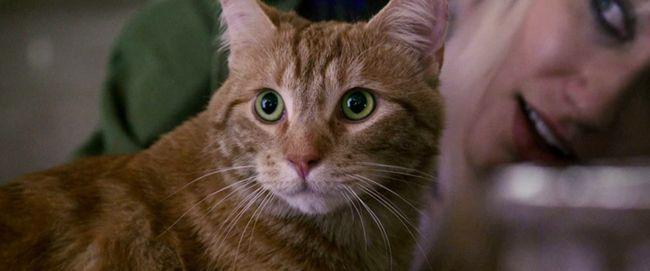 Bob Kucing Di Buku Film A Street Cat Named Bob Mati