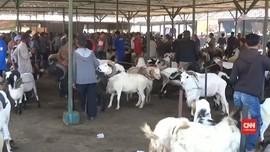VIDEO: Pasar Hewan Abaikan Protokol Kesehatan