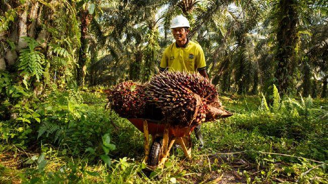 Sebanyak 30 orang pekebun swadaya di Provinsi Sumatera Selatan jadi yang pertama di dunia mendapatkan sertifikasi berdasarkan Standar Pekebun Swadaya RSPO.