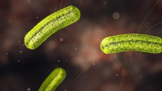 Peneliti Temukan Bakteri Gerogoti Logam