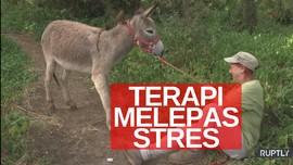 VIDEO: Terapi Keledai Untuk Tenaga Medis