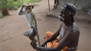 FOTO : Dilema Suku Telugu di Sri Lanka Akibat Covid-19