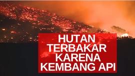 VIDEO: Ratusan Hektar Hutan Terbakar Karena Kembang Api