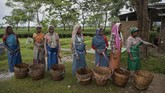 Indian pluckers line up after handing over the collected tea leaves at a tea garden in Biswanath Chariali district of eastern state of Assam, India, Saturday, June 27, 2020. Assam produces more than 50 percent of India's tea crop. (AP Photo/Anupam Nath)