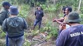 Petugas memeriksa bangkai harimau Sumatera  (Panthera tigris sumatrae) yang ditemukan mati di kawasan perkebunan masyarakat di Kecamatan Trumon, Kabupaten Aceh Selatan, Aceh, Senin (29/6/2020). Harimau Sumatera tersebut diduga mati akibat diracun. ANTARA FOTO/Hafizdhah/Lmo/pras.
