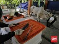 FOTO: Panduan Penyembelihan Hewan Kurban di Masa Pandemi
