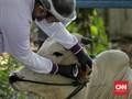 Penyembelih Hewan Kurban di Bandung Dilarang Tukar Golok
