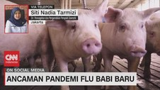 VIDEO: Ancaman Pandemi Flu Babi Baru