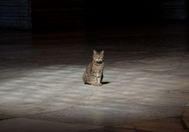 Kucing Gli Penghuni Hagia Sophia Mati Akibat Usia