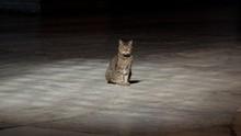Berkenalan dengan Gli, Kucing Gembul Penghuni Hagia Sophia