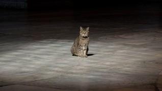 Erdogan Masih Izinkan Kucing Gli Bermukim di Hagia Sophia
