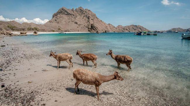 Indonesia tercatat mempunyai 5 wisata budaya dan 4 wisata alam yang diakui UNESCO. Berikut daftar situs warisan dunia di Indonesia.