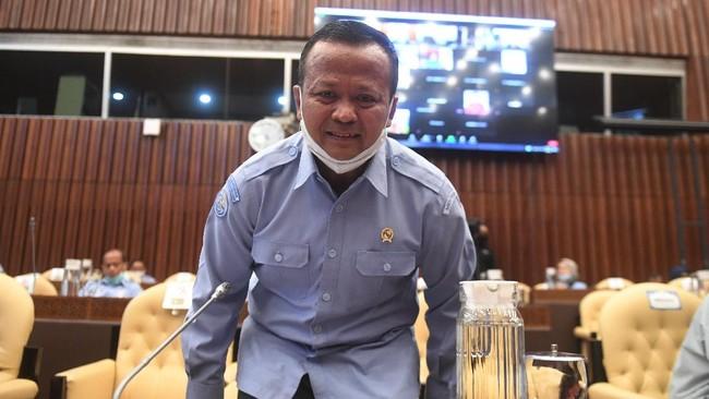 Edhy Ditangkap KPK, Janggal Ekspor Benih Lobster Jadi Sorotan