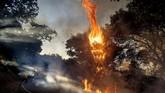 A wildfire burns along Canada Road near Gilroy, Calif., Sunday, July 5, 2020. (AP Photo/Noah Berger)