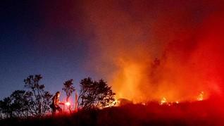FOTO: Kebakaran Hutan Seluas 1.500 Hektare di California