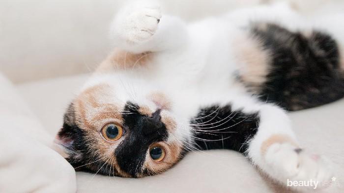 4 Rekomendasi Channel Youtube Bertemakan Dunia Kucing: Lucu-Lucu Banget!