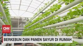 VIDEO: Berkebun & Panen Sayur di Rumah