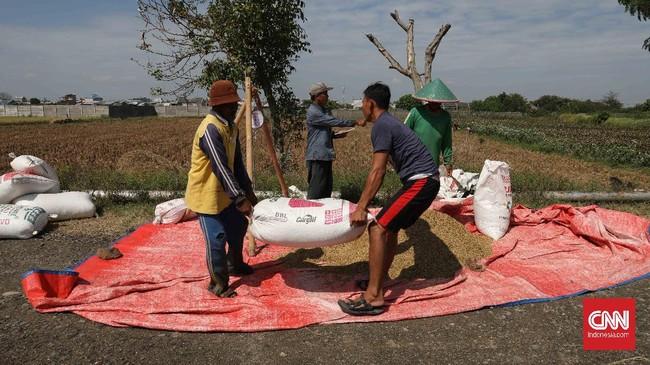 Petani menimbang padi di persawahan Tarumajaya, Kabupaten Bekasi, Jawa Barat, Selasa, 7 Juli 2020. Petani diharuskan memanfaatkan semua alat pertanian untuk meningkatkan produktifitas di musim tanam II. CNNIndonesia/Safir Makki