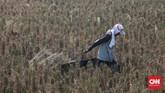 Petani menarik karung berisi padi yang usai dipanen di persawahan kawasan Tarumajaya, Kabupaten Bekasi, Selasa, 7 Juli 2020. CNNIndonesia/Safir Makki