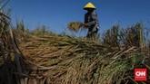 Petani memanen padi di persawahan Tarumajaya, Kabupaten Bekasi, Jawa Barat, Selasa, 7 Juli 2020. Ribuan alat mesin pertanian yang akan disebarkan ke 33 provinsi yang menjadi sentra produksi padi dan daerah yang rawan terhadap kekeringan. CNNIndonesia/Safir Makki