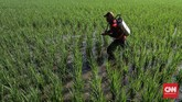 Petani menyemprotkan obat hama di di persawahan Tarumajaya, Kabupaten Bekasi, Jawa Barat, Selasa, 7 Juli 2020. Indonesia diprediksi akan memasuki musim kemarau panjang tahun ini. CNNIndonesia/Safir MAkki