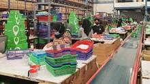 Marketplace Domestik Jadi Wadah Bertumbuh Produk Lokal