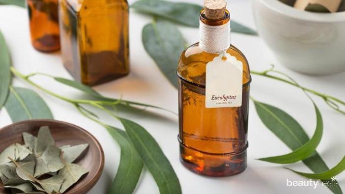 Viral Bisa Menangkal Virus Corona, Apa Sebenarnya Manfaat Eucalyptus?